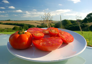 tomatoes buttervilla cornwall