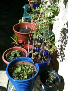 garden penzance