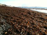 seaweed_penzance - 01