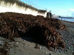 seaweed_penzance – 06
