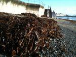 seaweed_penzance - 09