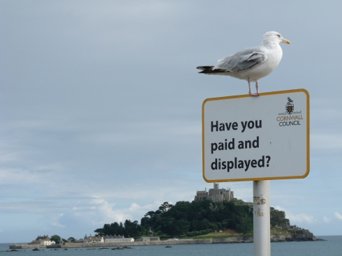 seagullparking