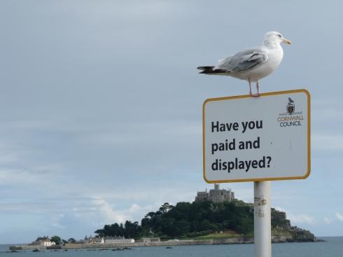 seagullparking